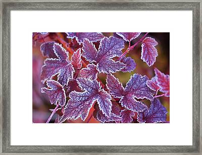 Natural Patterns Framed Print by Jenny Rainbow