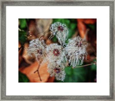 Framed Print featuring the photograph Natural Plant Designs by Robert Pilkington