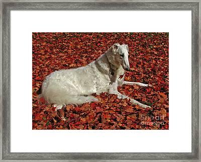 Natural Red And White Framed Print by Deborah Johnson