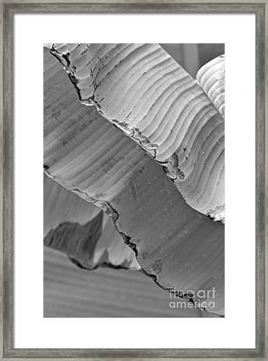 Natural Shingles Framed Print by Tim Good