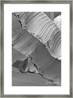 Natural Shingles Framed Print