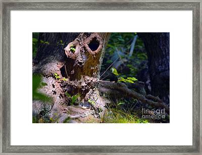 Natural Spirit #2 - Nature Art Framed Print by Robyn King