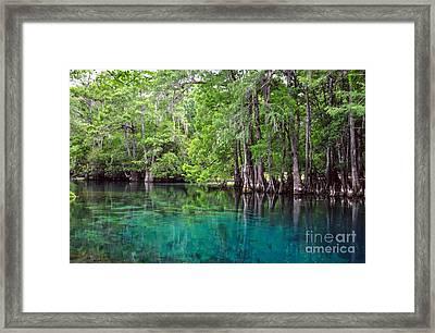Natural Spring Framed Print by Debbie Green