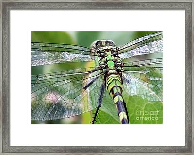 Natural Stained Glass Framed Print by Carol Groenen