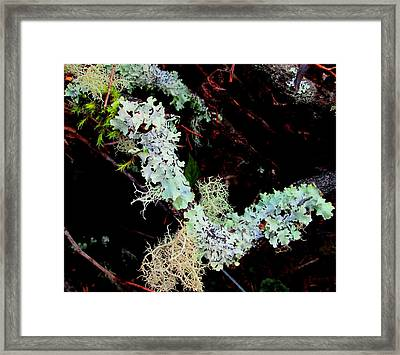 Natural Still Life #2 Framed Print