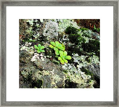 Natural Still Life #3 Framed Print