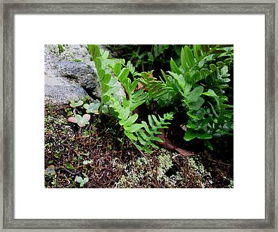 Natural Still Life #4 Framed Print