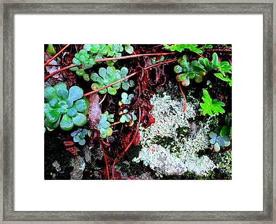 Natural Still Life #5 Framed Print