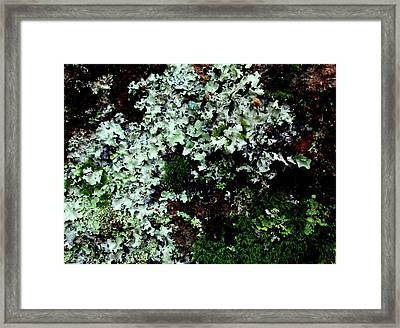Natural Still Life #6 Framed Print