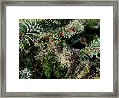 Natural Still Life #7 Framed Print