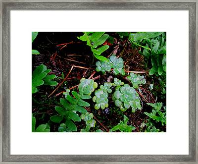 Natural Still Life #8 Framed Print