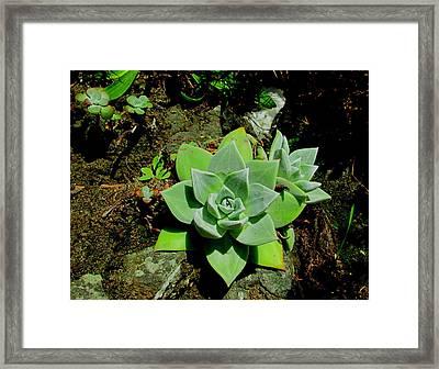 Natural Still Life #9 Framed Print