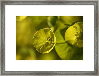 Natural Strength  Framed Print