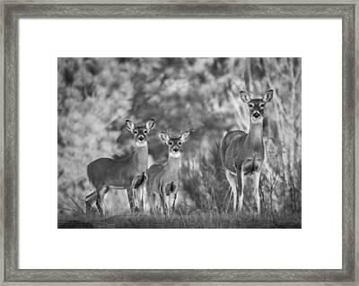 Natural Strength Framed Print