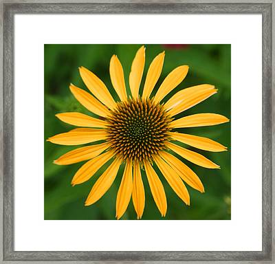 Natural Symmetry Framed Print by Jean Haynes