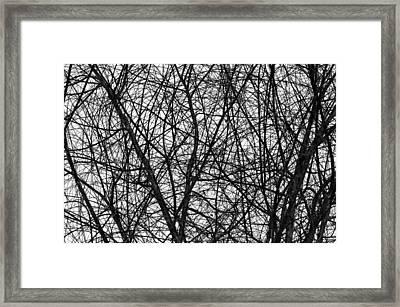 Natural Trees Map Framed Print by Konstantin Sevostyanov