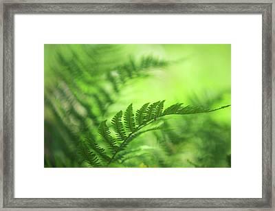 Natural Vibes. Green World Framed Print
