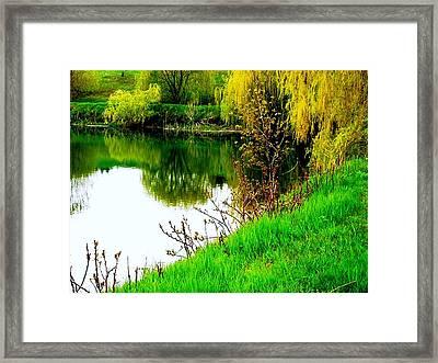 Natural Vibrance Framed Print by Shelley Blair