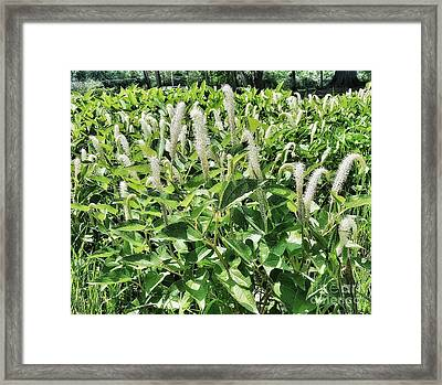 Natural Vision Framed Print