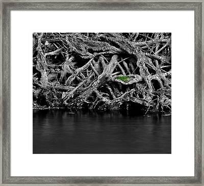 Natural Weaves Framed Print by Mark Fuller