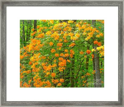 Natural Wild Azaleas  Framed Print by Rand Herron