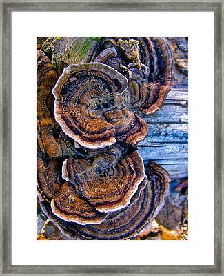 Natural World Fans Framed Print by Debra     Vatalaro