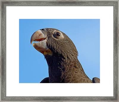 Naturally Black - Parrot Framed Print