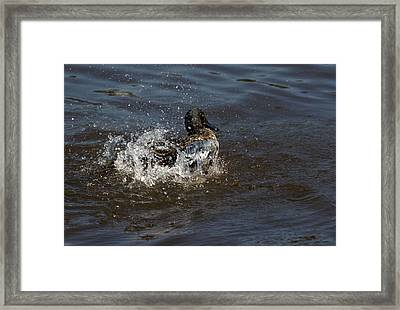 Naturally Clean Framed Print