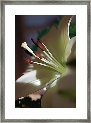 Naturally Elegant Framed Print