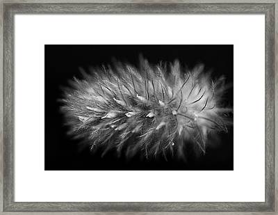 Naturally Soft Framed Print