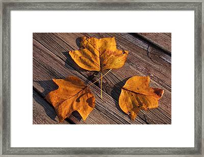 Nature And Me Framed Print