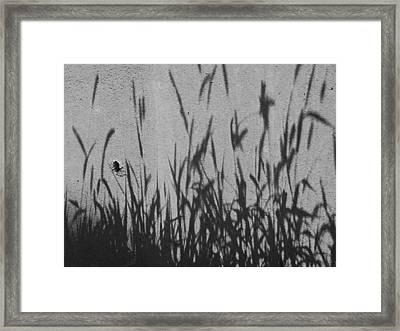 Nature As Shadow Framed Print by Lenore Senior