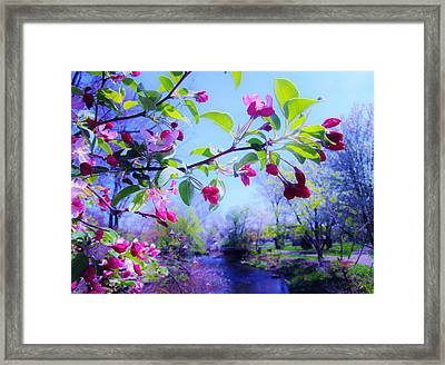 Nature Awakening Framed Print
