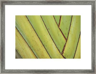 Nature Background, Green Leaves, Flowers In Natural Light And Sh Framed Print