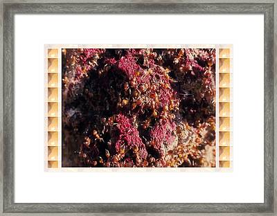 Nature Beautiful  Insect World  Ant Hill Hole Colony  Framed Print