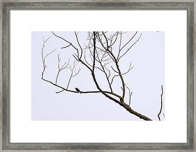 Nature - Bird On Branch 1 Framed Print by Arthur Babiarz