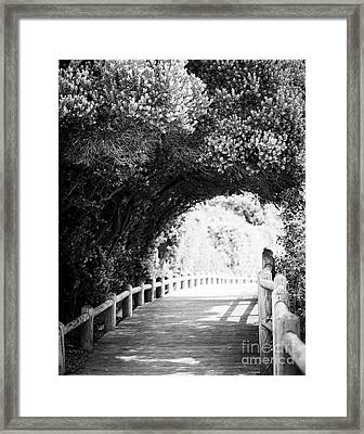 Framed Print featuring the photograph Nature Boardwalk Black And White by Tim Hester