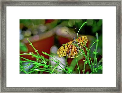 Nature - Butterfly And Plants Framed Print
