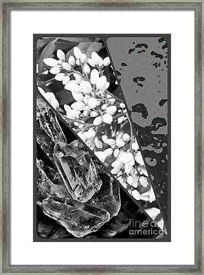 Nature Collage In Black And White Framed Print