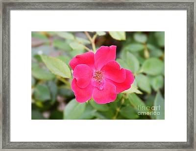 Framed Print featuring the photograph Nature - Colorful Flower Gifts  by Ray Shrewsberry