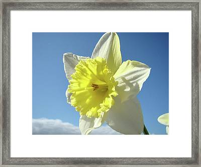 Nature Daffodil Flowers Art Prints Spring Nature Art Framed Print by Baslee Troutman