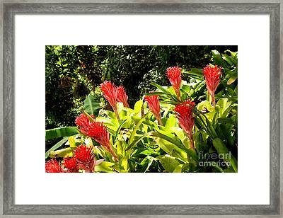 Framed Print featuring the photograph Nature Exotic by The Art of Alice Terrill