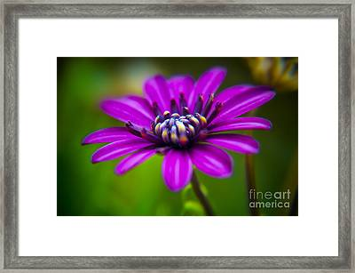 Nature Explosion Framed Print by Alessandro Giorgi Art Photography