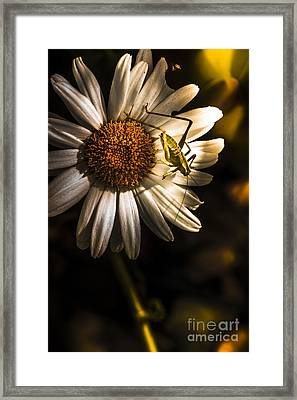 Nature Fine Art Summer Flower With Insect Framed Print by Jorgo Photography - Wall Art Gallery