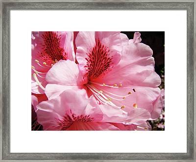 Nature Floral Art Prints Pink Rhodies Flowers Baslee Troutman Framed Print