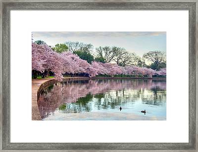 Nature Heals Framed Print by Mitch Cat