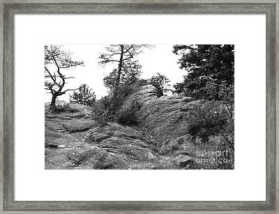 Nature In Bc Framed Print