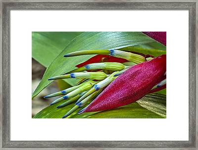 Nature In Bloom Framed Print