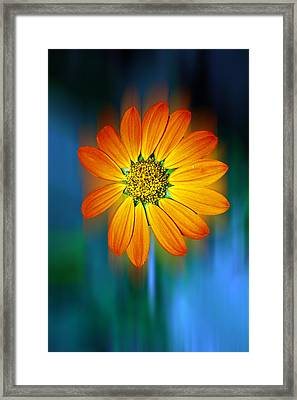 Nature In Motion Framed Print by Wendy Mogul