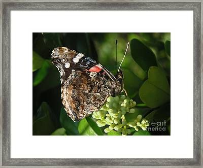 Nature In The Wild - A Rest For The Weary Framed Print by Lucyna A M Green